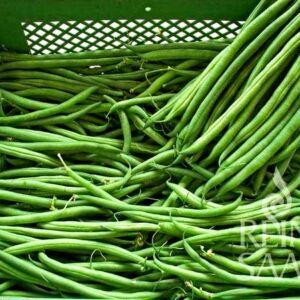 Caruso zöldbab bio vetőmag