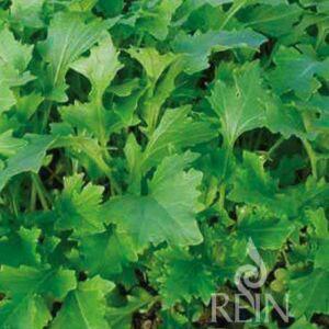 Namenia ázsiai saláta bio vetőmag