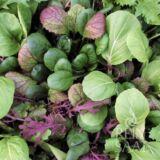 Oriental mix ázsiai bio saláta keverék
