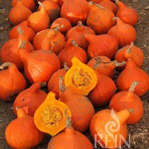 Kue009 Hokkaido Orange Web 600 Thegem Product Catalog