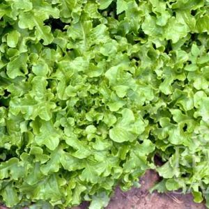 Sa036 White Salad Bowl Web 600 Thegem Product Catalog