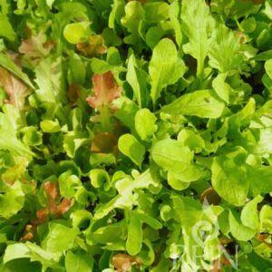 Misticanza saláta bio vetőmag