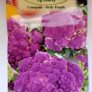 Sicily purple