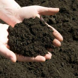 A paradicsom talajának előkészítése