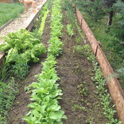 Ökológiai ágyások kialakítása