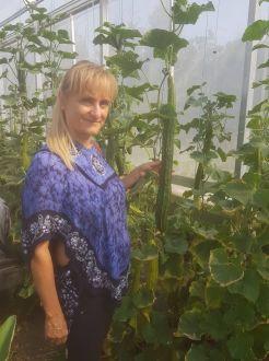 Az uborka nyári, biológiai védelme