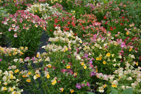 Ökológiai virágszigetek kezelése nyár végén