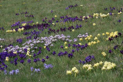Legkésőbbi és legkorábbi virágaink